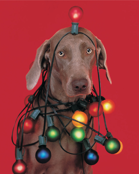 William Wegman Holiday